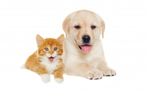 Alimentador automático gatos y perros
